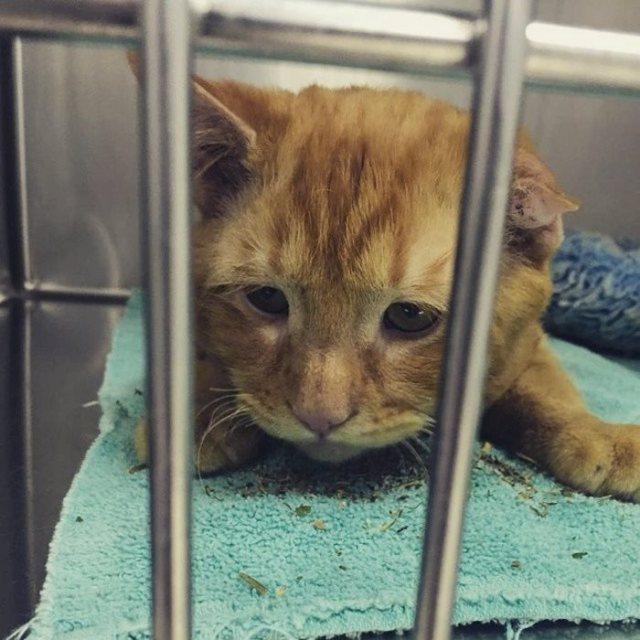 saddest-shelter-cat-benben-transformation-1