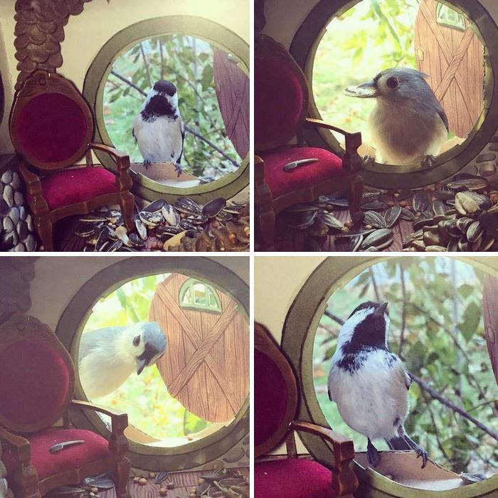 tiny-bird-friends-homes-jada-fitch -10