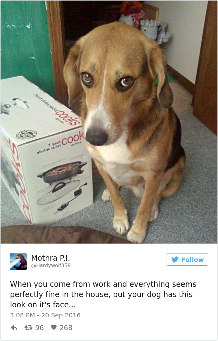 26 Tweets That Will Make Any Dog Owner Laugh