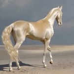People Are Calling This Super Rare Creature The World S Most Beautiful Horse Bored Panda