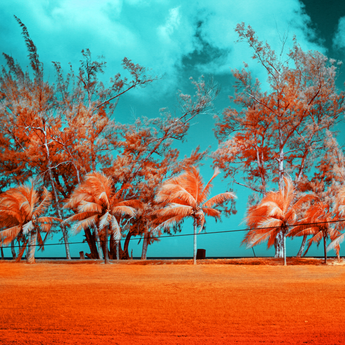 I See The World In Infrared