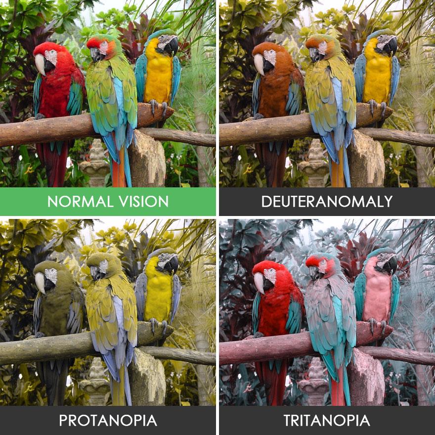 Papağanlar