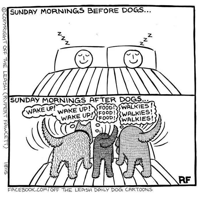 "10+ Hilarious Comics About Life With Dogs By ""Off The"