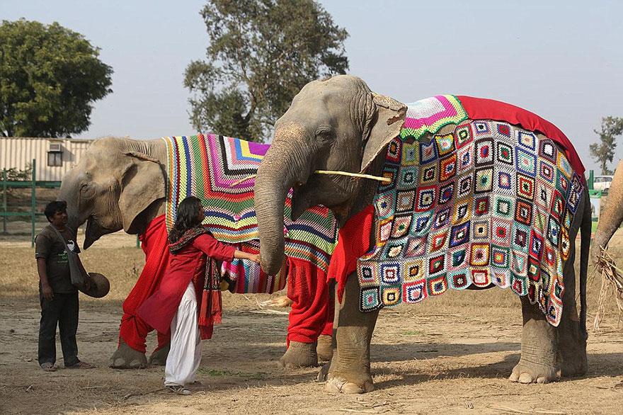 people-knit-giant-sweaters-rescue-elephants-6