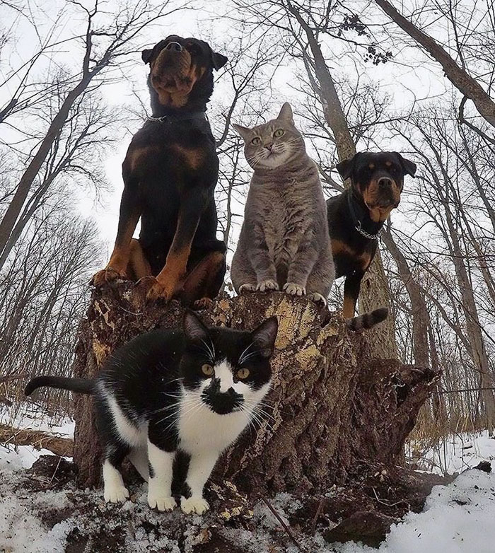 The Meow-tang Clan Pose For Their Debut Rap Album