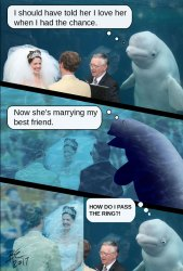 Beluga Whale Attends A Wedding Inspires A Hilarious Photoshop Battle Bored Panda