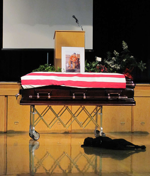 Labrador Retriever Hawkeye Lays By The Casket During The Funeral Of His Owner, Navy SEAL Jon Tumilson