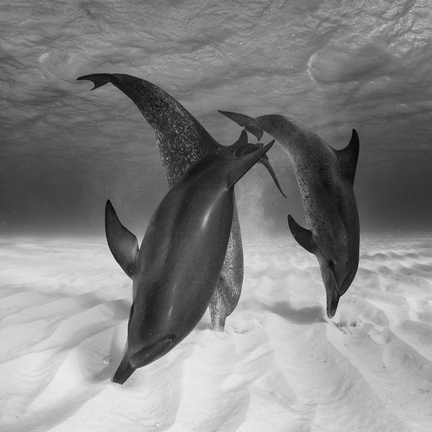Eugene Kitsios, Netherlands (Open Competition, Wildlife)