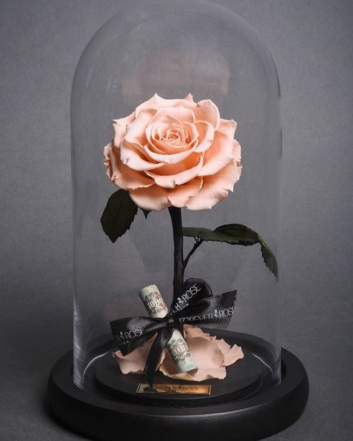 Real Beauty And The Beast Roses Exist And Theyll Last