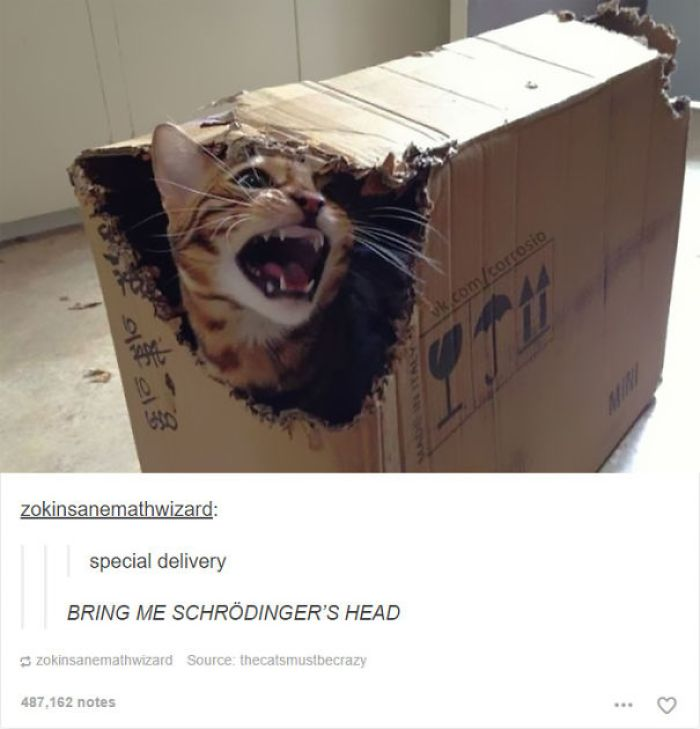 funny tumblr cats 55 5811f3f4e665d  700 58d3ea21b38cb  605 - 30+ Photos That Prove Cats Are Actually Demons