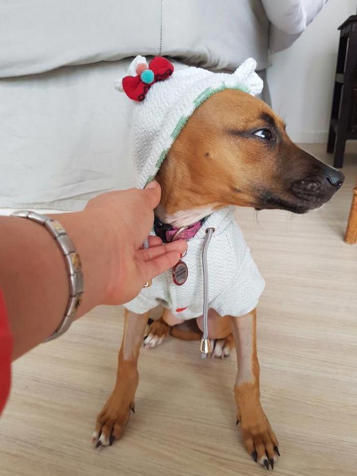 boy-walks-miles-help-dying-parvo-virus-dog-nanuk-4