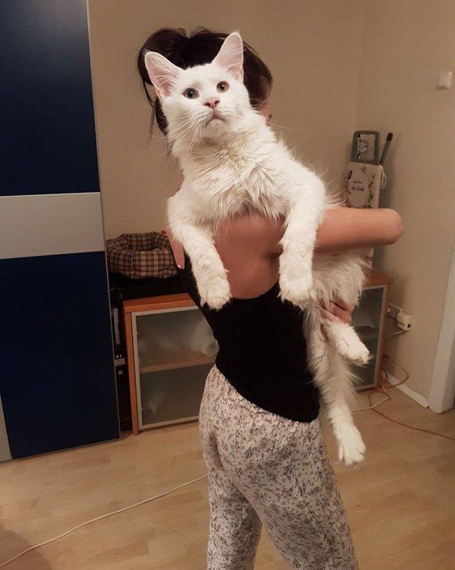 maine-coon-cat-hugs-owner-tihon-28