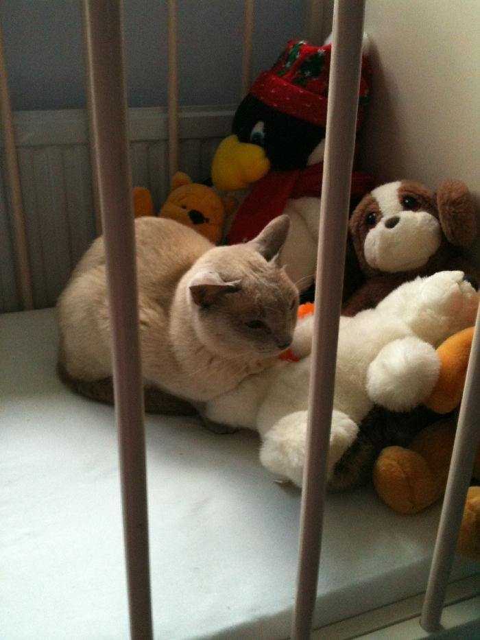 hermosos gatos que invadieron casas
