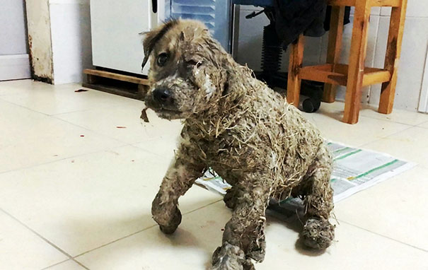 puppy-covered-clue-rescued-pascal-1