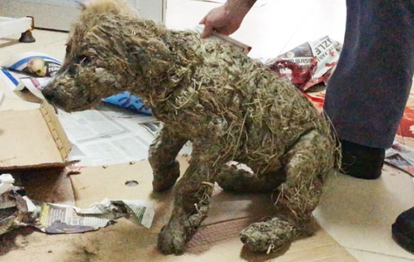 puppy-covered-clue-rescued-pascal-10