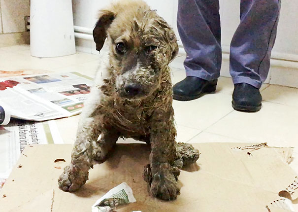 puppy-covered-clue-rescued-pascal-2