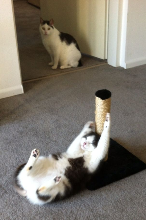 Catnip + Cat Pole: Awkward Family Situation (Mother And Son)