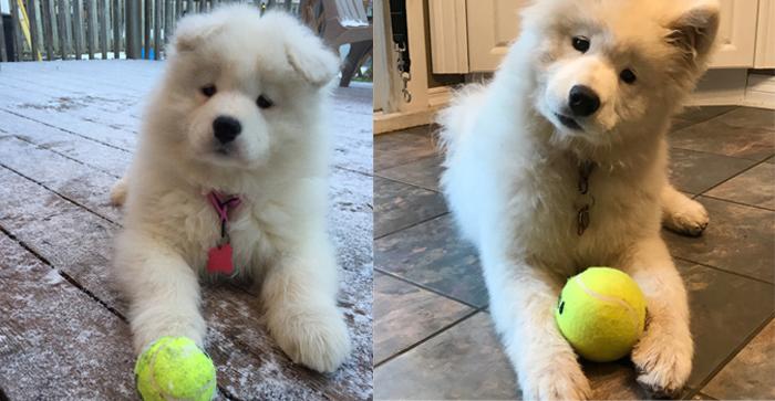 Mochi aos 2 e 6 meses