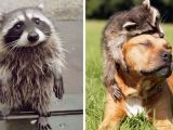 10 Trash Panda Pics That Prove They Re The Cutest Animal