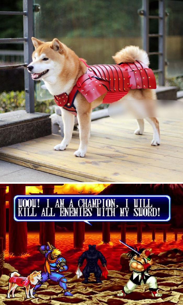 Samurai Armour-wearing Dog