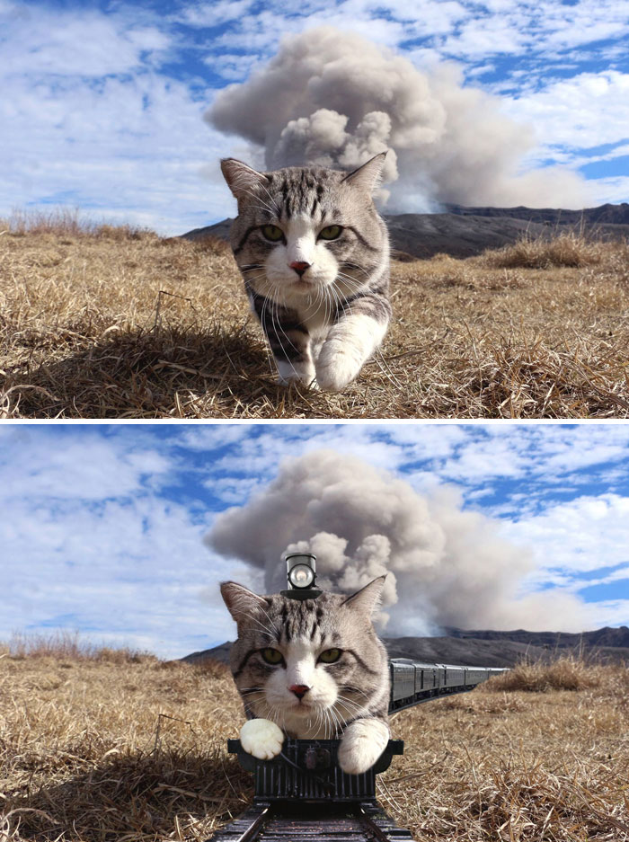 A Cat Walking In Front Of The Camera