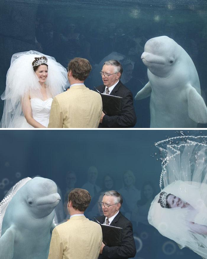 Beluga Whale At Wedding