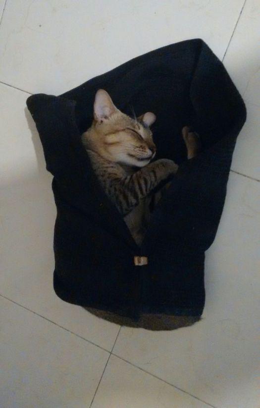 Cat-napkin