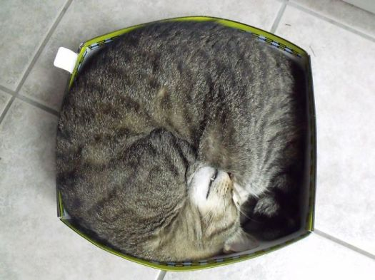 How To Fit A Very Round Tigger In A Square Box.......