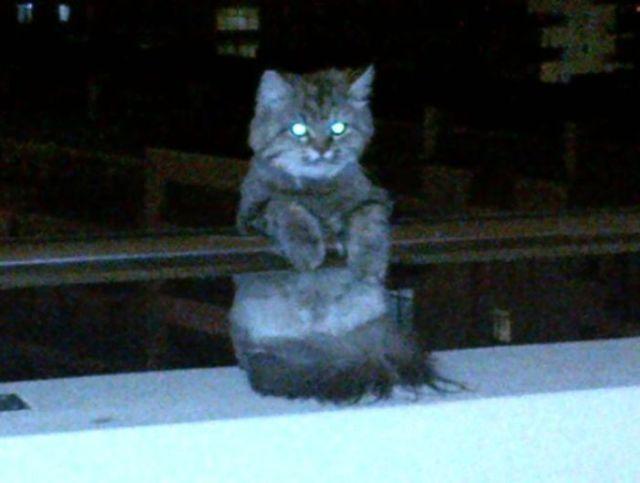 Me Desperté Con Ésto En Mi Terraza, ¡Siete Pisos De Altura! ¡Ni Siquiera Tengo Gato! Ya Está. Así Es Cómo Muero
