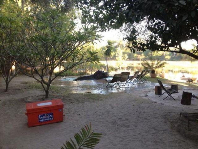 Mi Tía Y Mi Tío Tienen Un Bar De Mochileros En África, Y Se Hoy Se Despertaron Con Éste Visitante En La Piscina