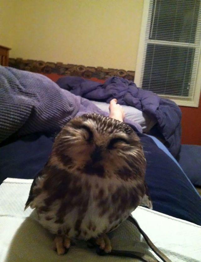 Mi Amiga Trabaja En Un Centro De Rehabilitación De Aves De Rapiña. Esta Mañana, Se Despertó Con Esta Preciosidad En El Pecho