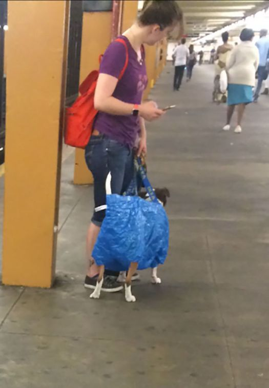 That's One Way To Get Around The 'Dog In Carrier' Subway Rule