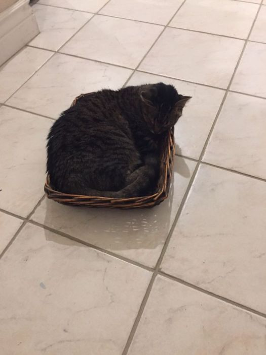 Chad In A Basket He Found On The Floor!