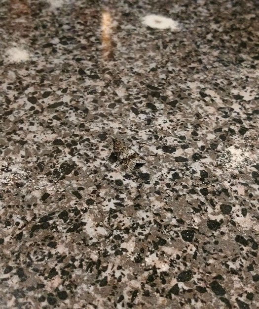 This Moth Perfectly Camouflaged Into The Bar Top
