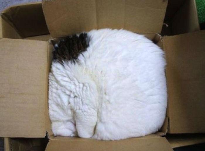 Cat.rar fotos de gatos locos