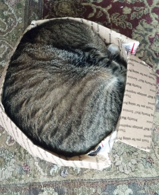 Our 22 Pound Cat, Ed, Made The Box Fit Him