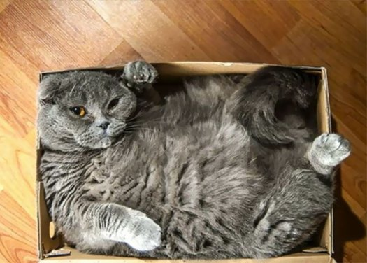 I Haven't Gained Weight - The Box Shrunk