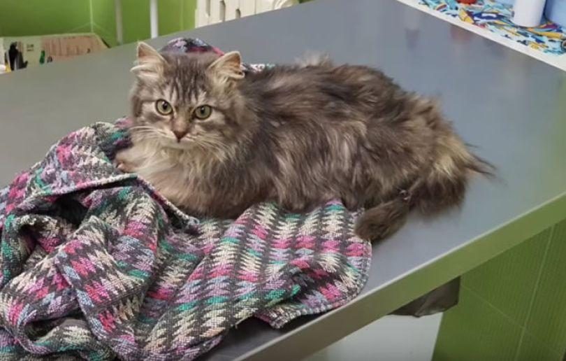man rescues freezing kitten slava nika cat pusic 8 59886c324f515 png  700 - A historia do homem e o gatinho congelado na Russia