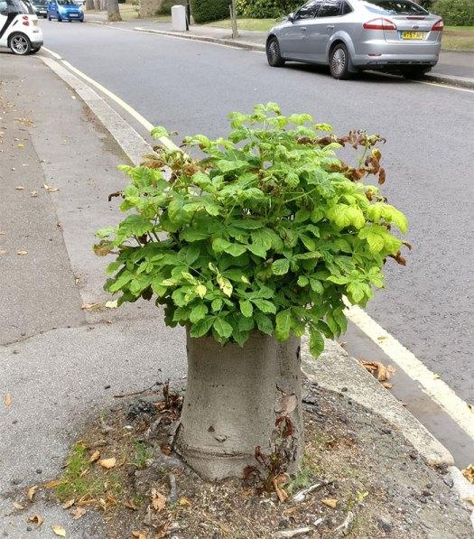 This Tree Refuses To Die