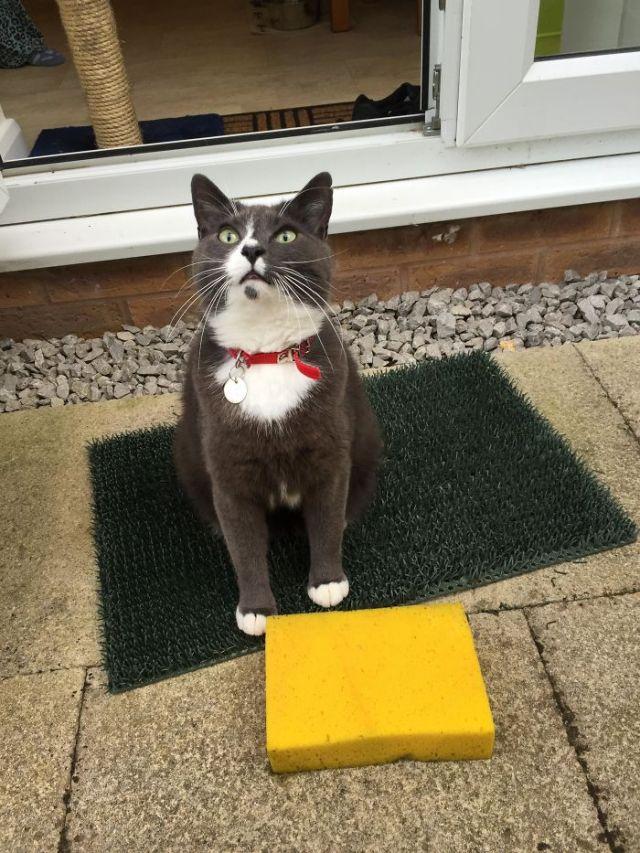 Our Cat Won't Stop Bringing Home Sponges