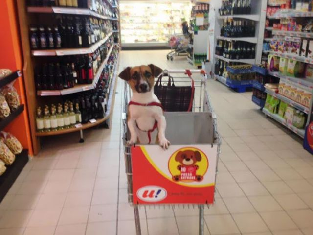 Italian Grocery Store Gets Dog-Friendly Carts So You Can Shop With Your Dog