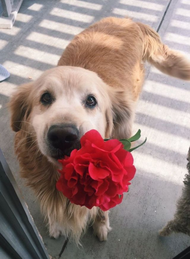 My Dog Is Too Good For This World, He Brought Me A Flower