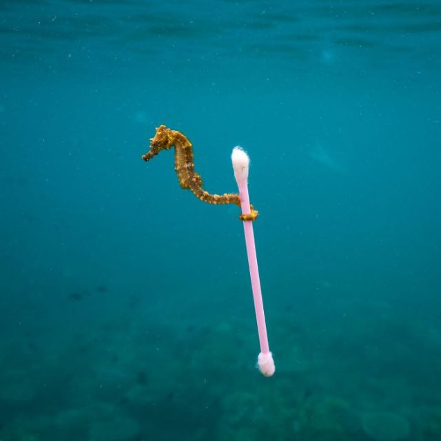 Sewage Surfer By Justin Hofman, US