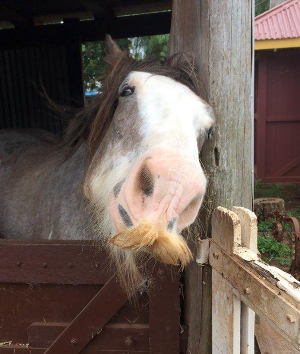 Oggi abbiamo incontrato un cavallo con stache di un killer