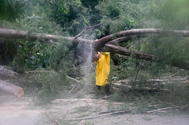 An Employee From An Electrical Company Works To Remove A Tree Felled By Hurricane Irma, In Sanchez, Dominican Republic, On Thursday
