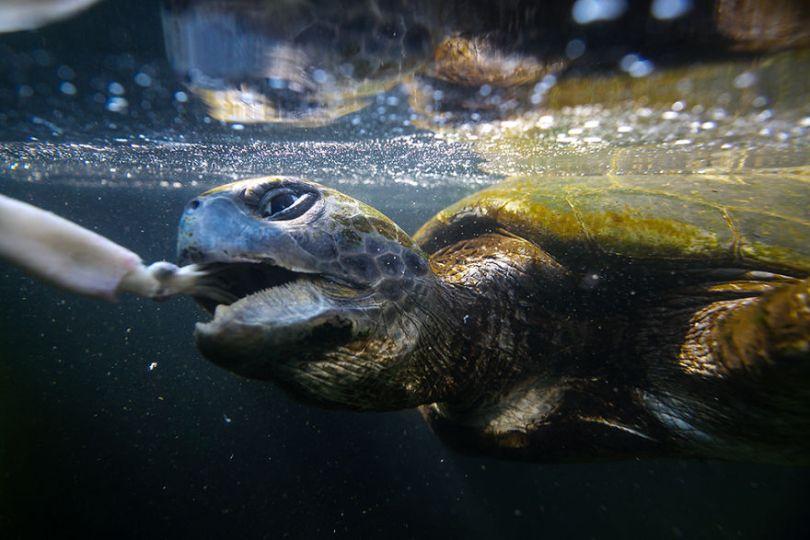 IMG 0765 Edit 59f08c1b613fb  880 - Homem especializa-se em fotografar resgate de tartarugas