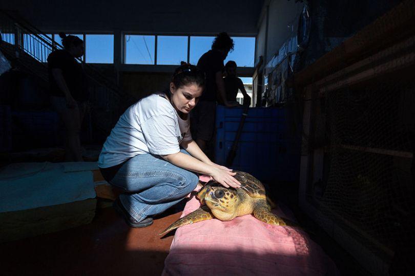 IMG 6694 Edit 59f08c51eb30b  880 - Homem especializa-se em fotografar resgate de tartarugas