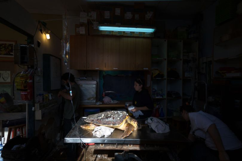 IMG 6789 Edit 59f08cd7d1277  880 - Homem especializa-se em fotografar resgate de tartarugas