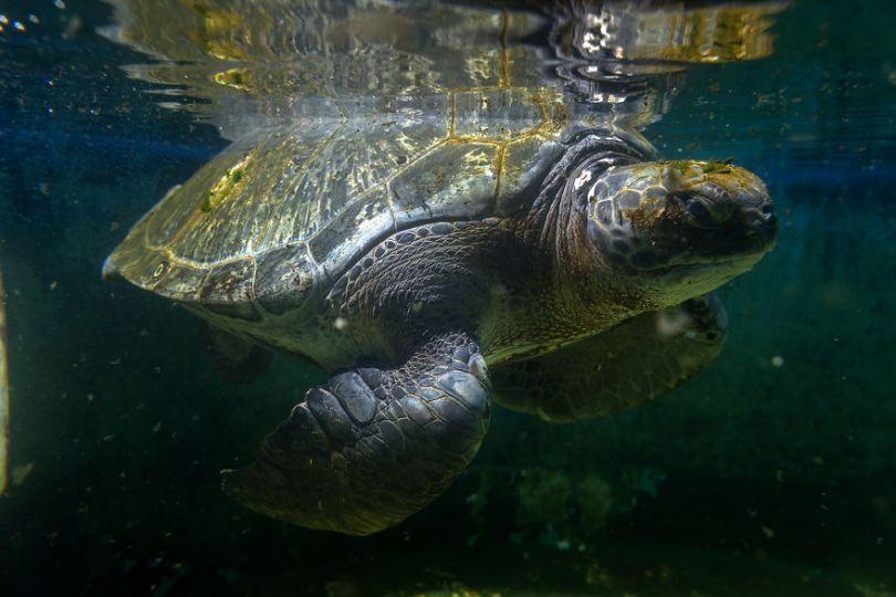 IMG 9153 Edit 59f08cf85e0b5  880 - Homem especializa-se em fotografar resgate de tartarugas