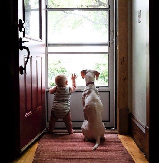 abused-rescue-dog-love-child-nora-elizabeth-spence-34